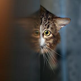 phantom by Ekaterina Kaznacheeva - Animals - Cats Portraits ( cat )