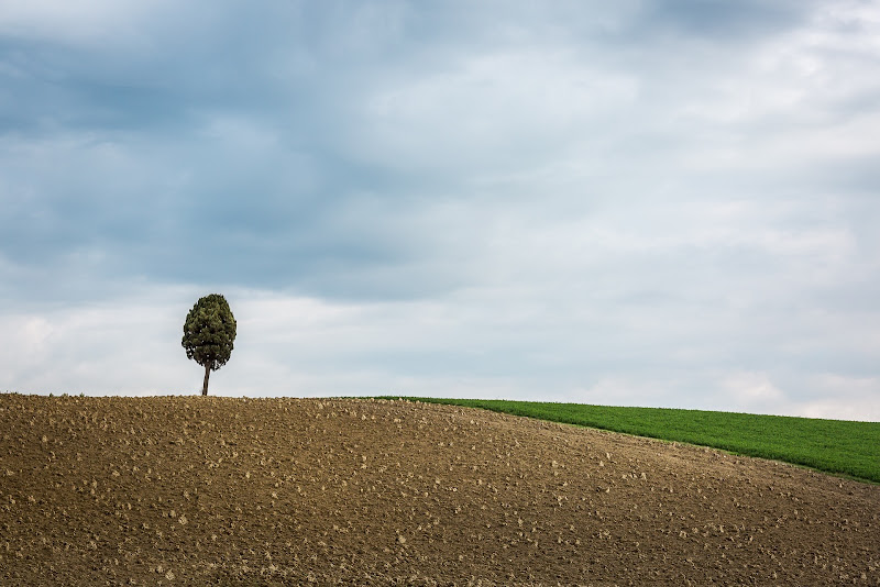 Lonely tree di Nico Angeli Photography