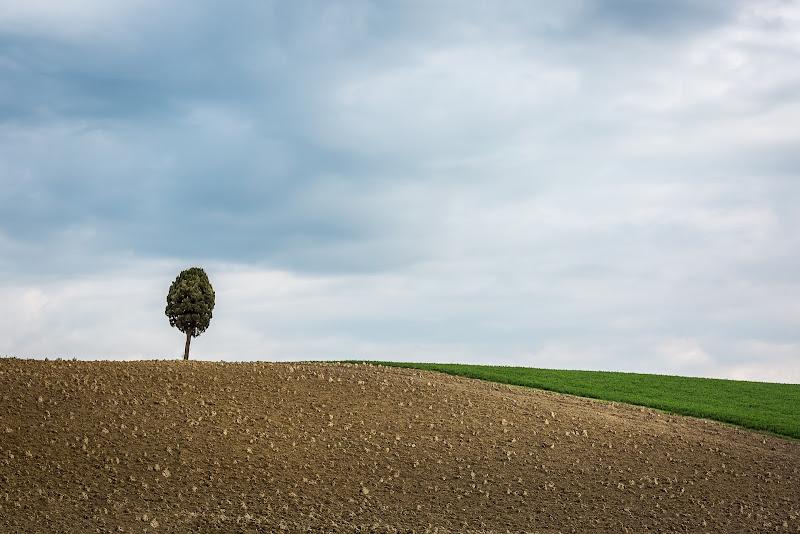 Lonely tree di Nico Angeli Photography