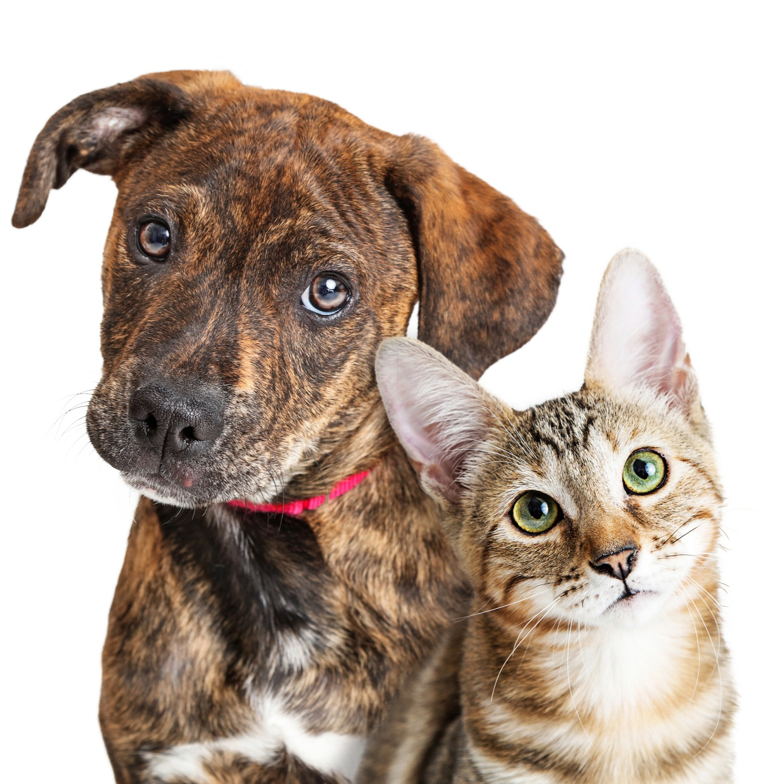 do cats and dogs get along