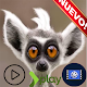 Videos Graciosos de Animales for PC-Windows 7,8,10 and Mac