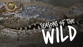 Seasons of the Wild thumbnail