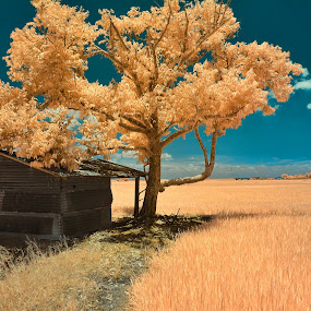 by Reeve Lim - Landscapes Prairies, Meadows & Fields