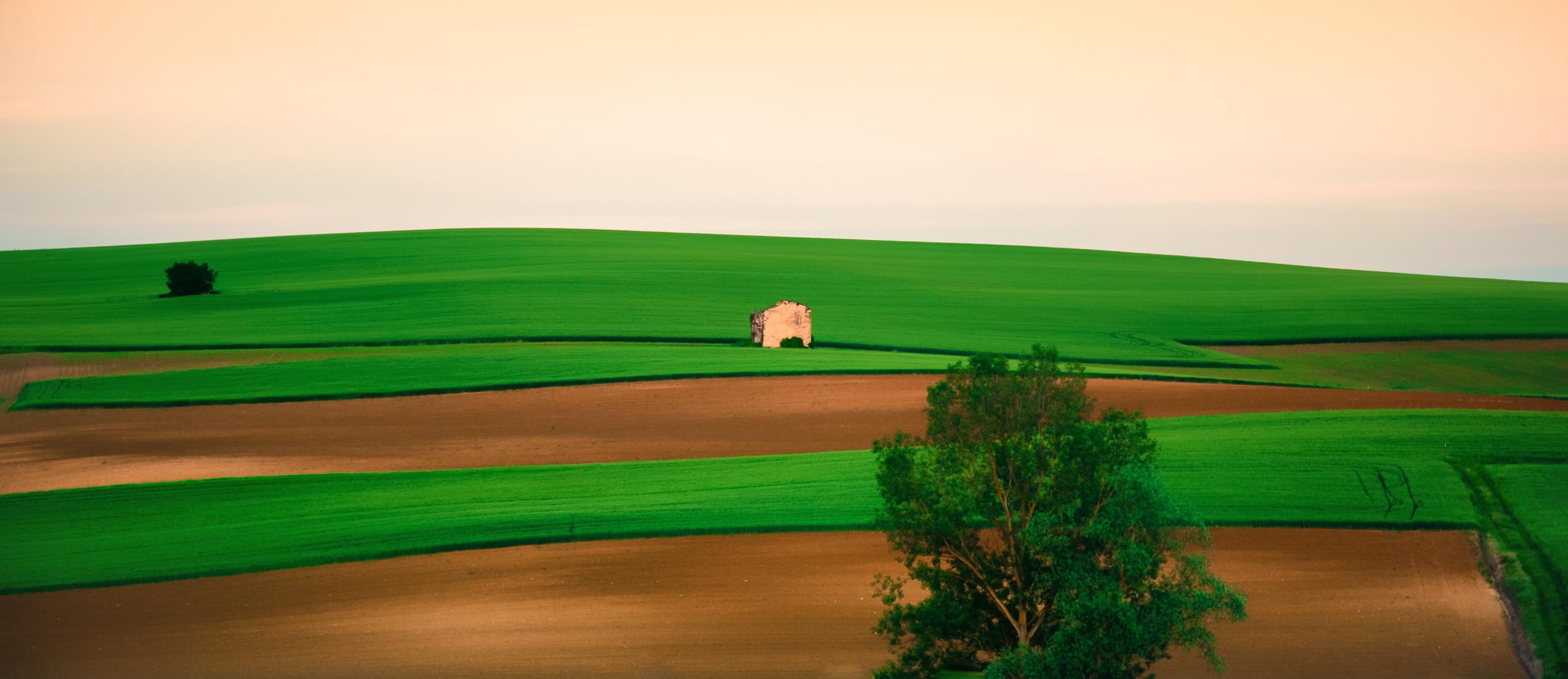 Color lines di Barbara Surimi