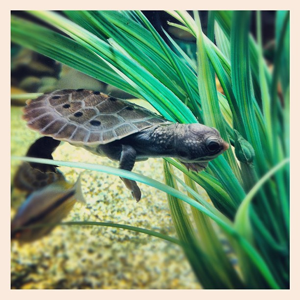 Awwwww the litte turtle by Sharne Perrett - Instagram & Mobile Instagram
