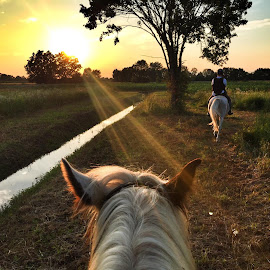 by Ivana Tilosanec - Instagram & Mobile iPhone ( hrvatska, nature, sunsets, people, croatia, sunlight, golden hour, sunset, natureza, animals, horse riding, landscape, nature photography, horses,  )