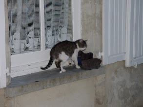 Photo: It's now early Sunday morning, and the house cat takes his usual breakfast spot on this window sill.