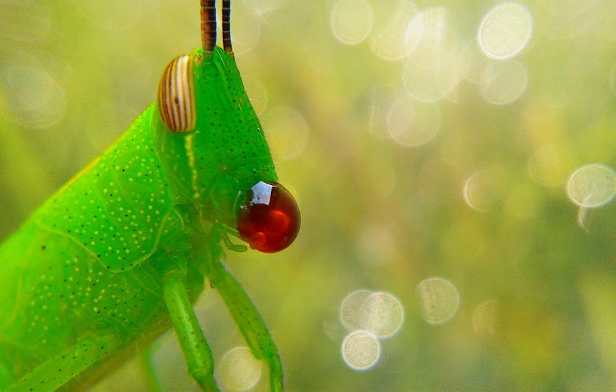 Grasshoper by Topa Nech - Instagram & Mobile Other (  )