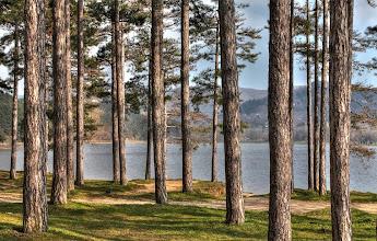 Photo: La pinède du Lac (12|20|32)