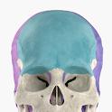 Anatomyka Skeleton icon