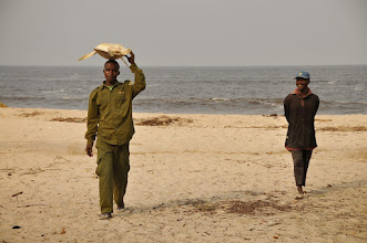Photo: how to carry a marine turtle in Congo