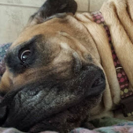 Creepy eyes  by Sarah Mayhew - Animals - Dogs Portraits ( dogs,  )