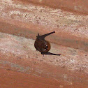 Small Forest Bat