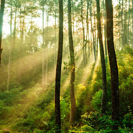 light of sunrise by Ignatius Winarto - Landscapes Forests ( forests, natural light, sunrises, nature, indonesia, beauty in nature, sunrise, landscape, light )