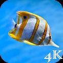 Sea Life 4K Wallpapers icon