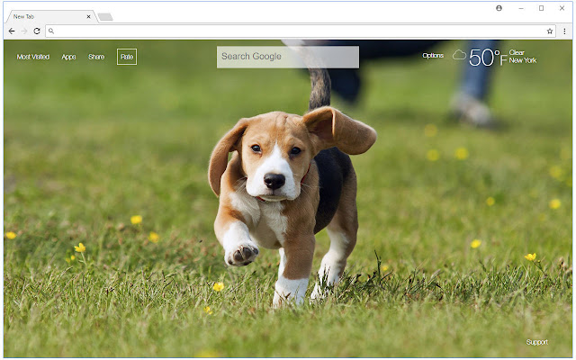 Beagle HD Wallpaper New Tab Themes