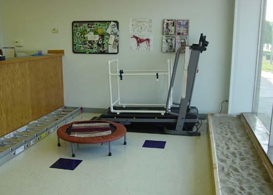 Equipment in a canine rehabilitation clinic can include mini-trampoline, sand box, treadmill, ladder