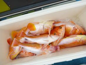 Photo: アカイサキ大漁! ・・・タナをあげよう!