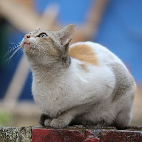 ID: The Meow's looks by Shibalik Choudhury - Animals - Cats Playing ( hunter, cat, adventure, looks, observation, meow, style, nature, portraits, animal_behaviour, animal,  )