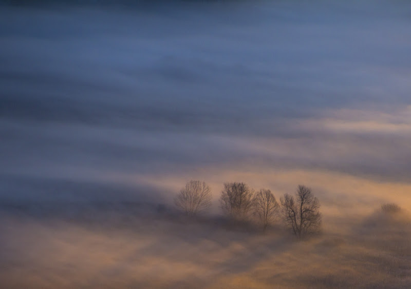 Alberi tra la foschia del mattino di Atum-Pietro