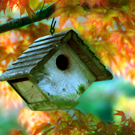 Japanese Maple Tree And Bird House by Robin Amaral - Artistic Objects Other Objects ( acer palmatum, fall leaves, soft focus, fall colors, bird watching, habitat, cape cod, japanese maple, isolated, autumn colors, simplicity, front focus technique, bird house, new england, season, autumn leaves, backyard, blurred, backlit )