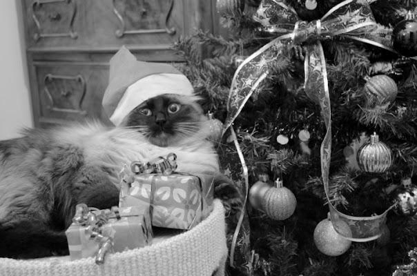 Mauguri e un felino anno nuovo! di miao