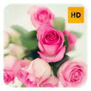 Pink Roses Wallpaper HD New Tab Theme© Icon