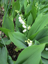 Photo: Lily of the Valley in the Healing Garden