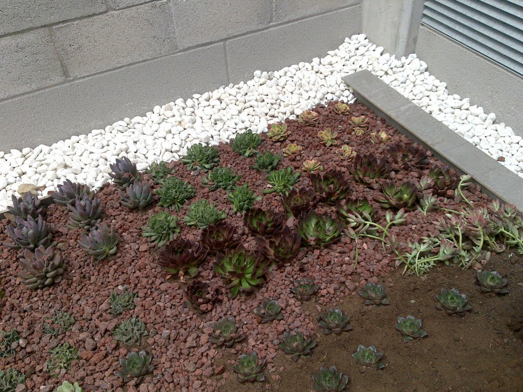 Plantas crasas en cubiertas vegetales