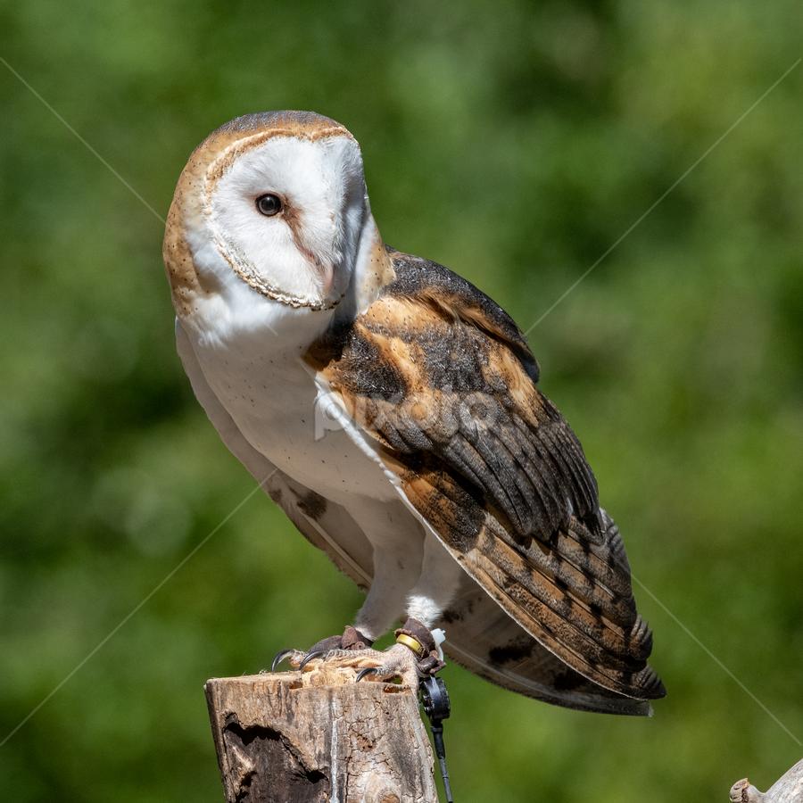 by Keith Sutherland - Animals Birds (  )
