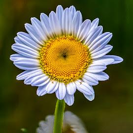 by P Murphy - Flowers Flowers in the Wild