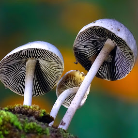 Mushroom  by Asif Bora - Nature Up Close Mushrooms & Fungi