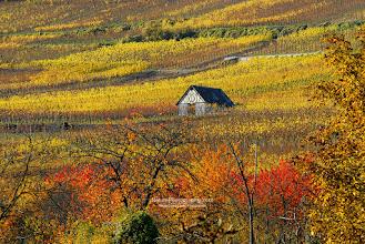 """Photo: Salut à tous,  Petite ballade dans les vignes Alsacienne, on dégustera le vin plus tard... Short walk through the vineyards of Alsace.  Et toujours sur le blog : • Photos d'automne : http://www.naturephotographie.com/category/portfolios/les-4-saisons/automne/ • ebook sur la Photo de Paysages (FR-US) : http://www.naturephotographie.com/blog/paysages-naturels-et-photographie/ • Wallpapers : http://www.naturephotographie.com/category/fonds-decran/ • Inspiration : """"The Cream of Landscape Photographers"""" http://www.naturephotographie.com/photographes-du-monde/  Bonne semaine ! Have a nice week !"""