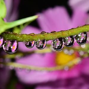 Water drops on flowers 210.JPG