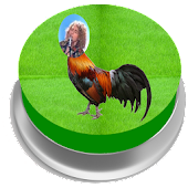 Gallo Eurovision Button