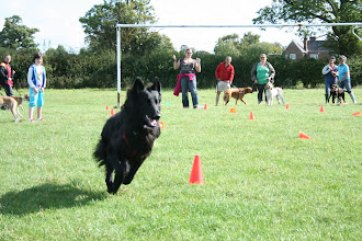 Photo: Lexy GSD action shot!
