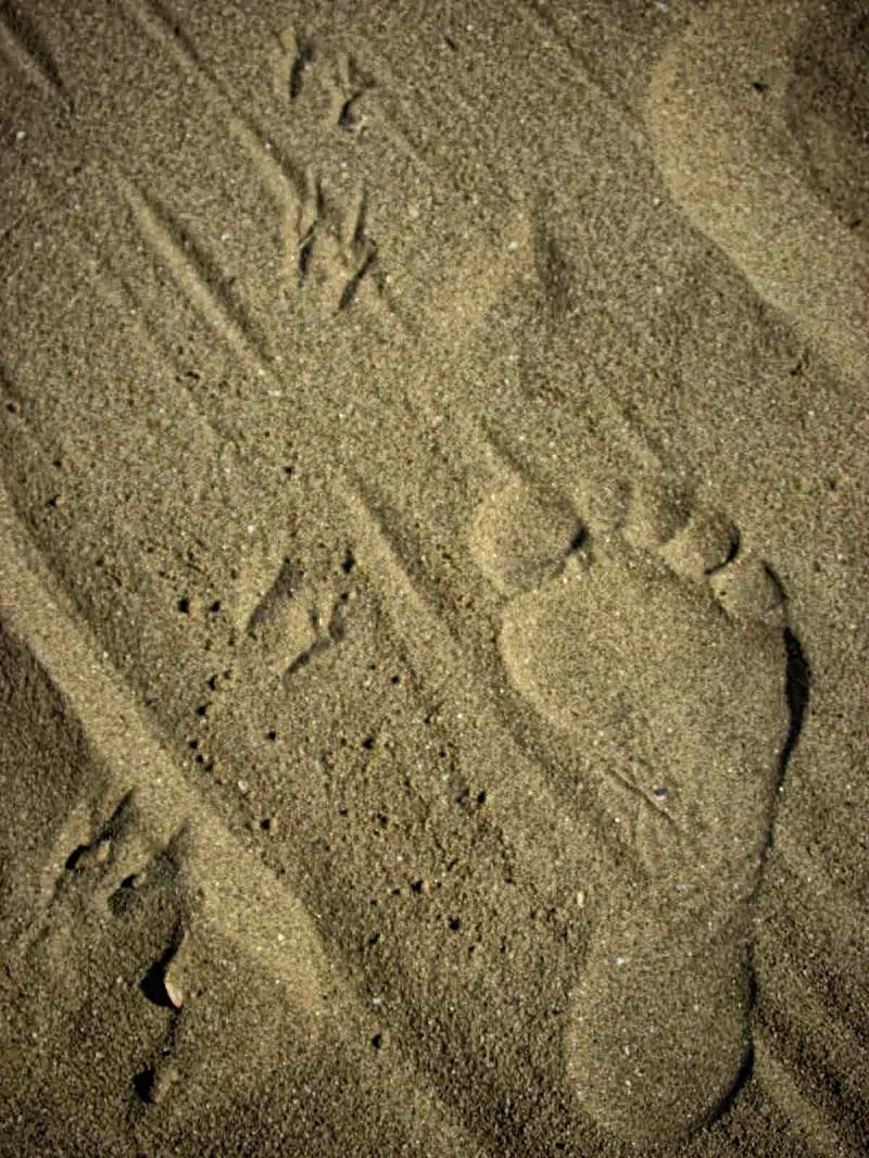 impronte sulla sabbia di DANI_DH