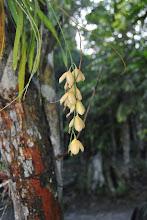 Photo: orchidea