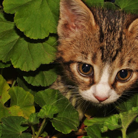 Plant? What plant? by Donna Wood - Animals - Cats Kittens ( cat, kitten, pet, plants, cute, pwc84,  )