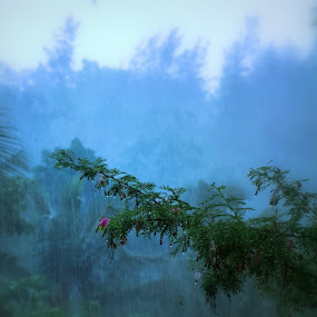 Monsoon.. by Praveen Kammaje - Nature Up Close Trees & Bushes