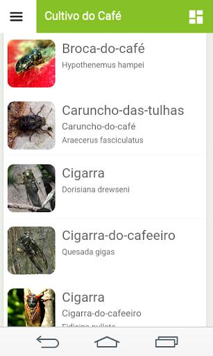 Cultivo do Café