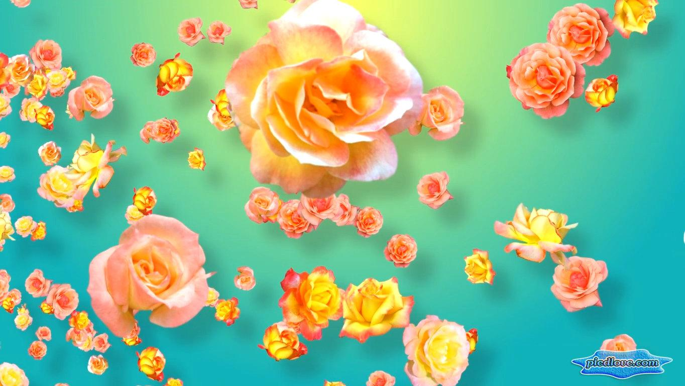 Tender Yellow Pink Roses 3D- screenshot
