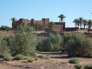 """Photo: Het """"Essence Bosje"""" bij Sidi Khalil begint te groeien"""