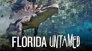 Florida Untamed thumbnail