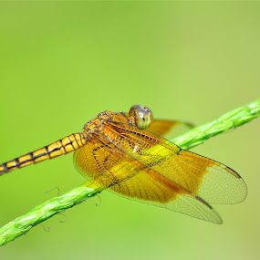 by Vinay Tyagi - Animals Insects & Spiders