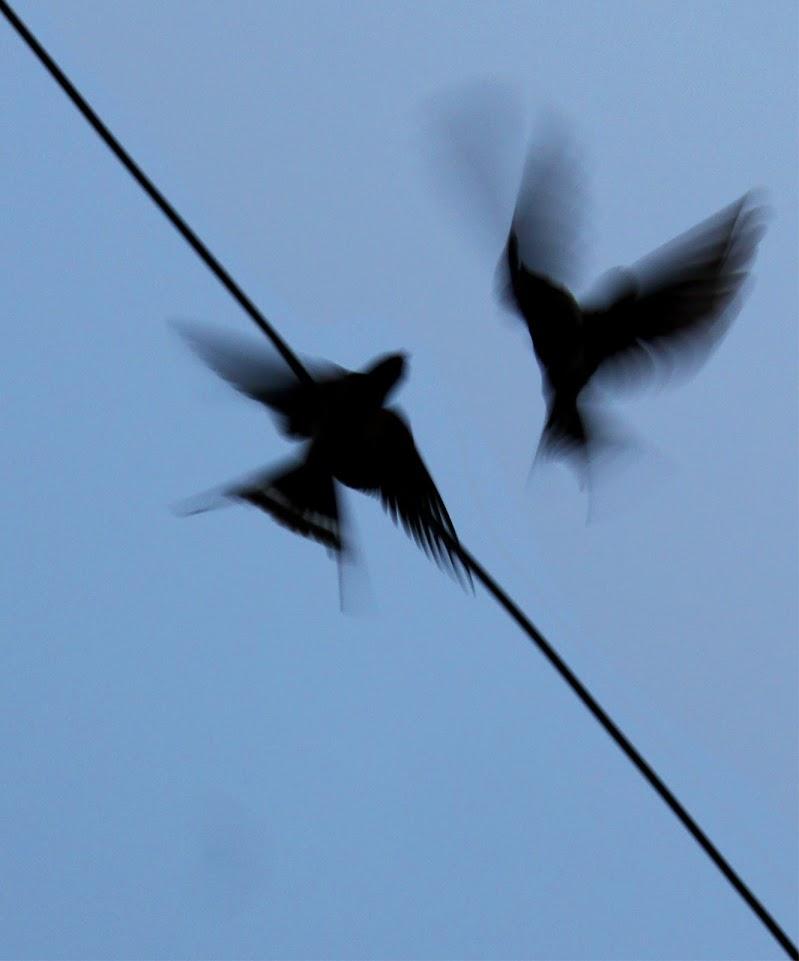 Battito d'ali di Datlas Erre