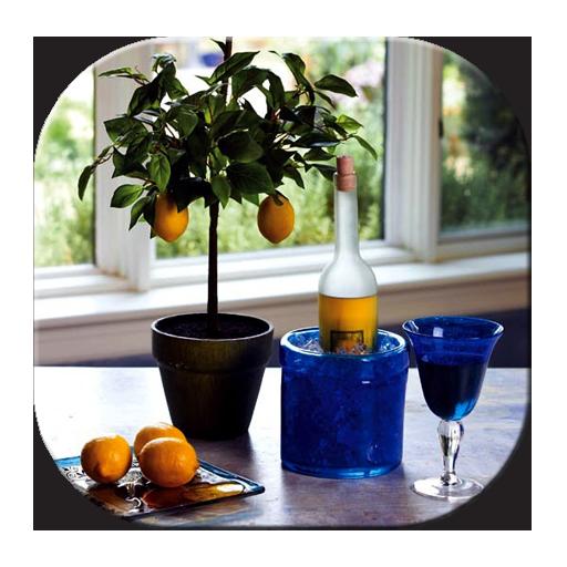 Fruit Trees In Pots (app)
