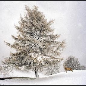by Padiham Camera Club - Uncategorized All Uncategorized