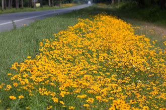 Photo: wildflowers coming into White Springs