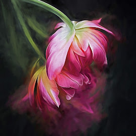 Fusion Flowers by CLINT HUDSON - Digital Art Things (  )
